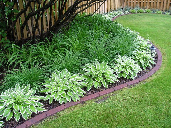 Самые живучие растения для клумб на даче 29