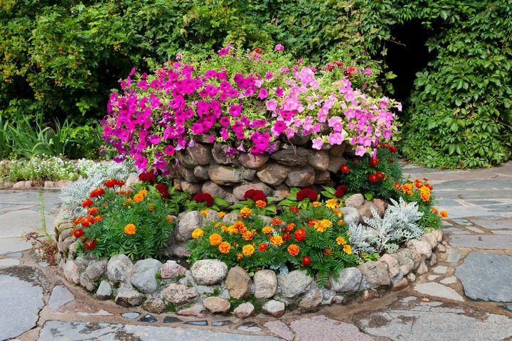Самые живучие растения для клумб на даче 4