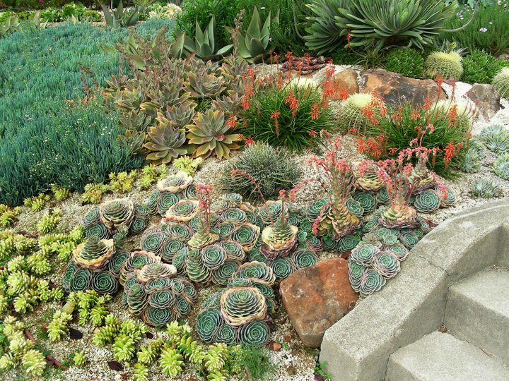Самые живучие растения для клумб на даче 21