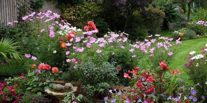 Самые живучие растения для клумб на даче 11
