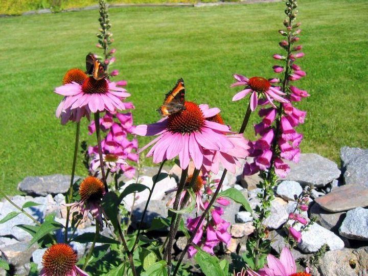 Самые живучие растения для клумб на даче 7