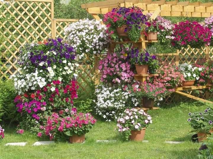 Самые живучие растения для клумб на даче 3
