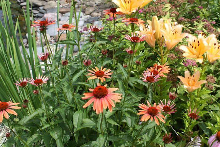Самые живучие растения для клумб на даче 8