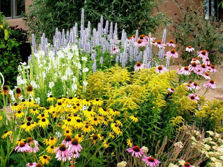 Самые живучие растения для клумб на даче 9