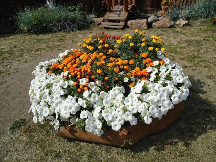 Самые живучие растения для клумб на даче 5