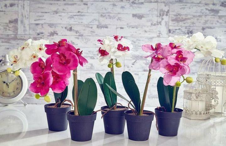 Высыхание корней у орхидеи: причины и решения 1