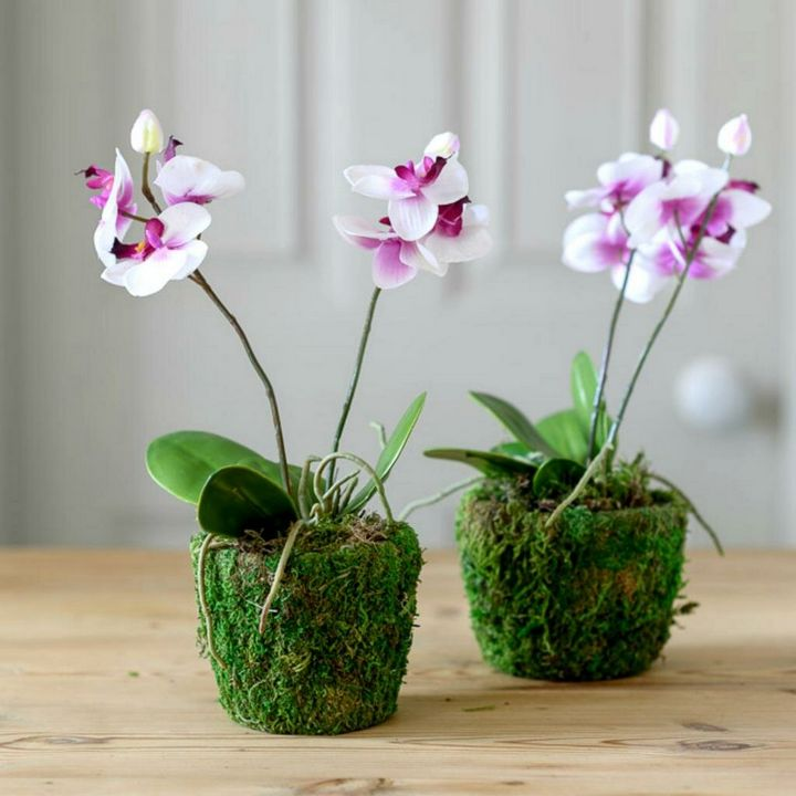 Высыхание корней у орхидеи: причины и решения 2