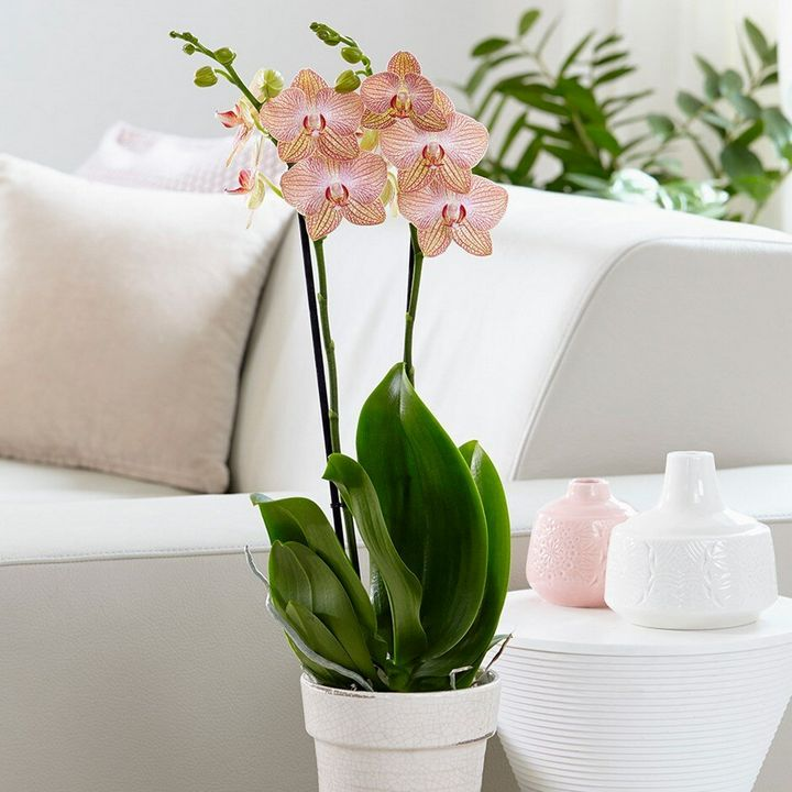 Высыхание корней у орхидеи: причины и решения 3