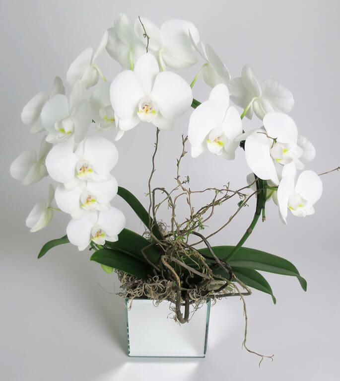 Высыхание корней у орхидеи: причины и решения 6